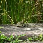 Žablje i specijalne prilike